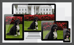 Thumbnail for #133: Figuring Out Responsive Images
