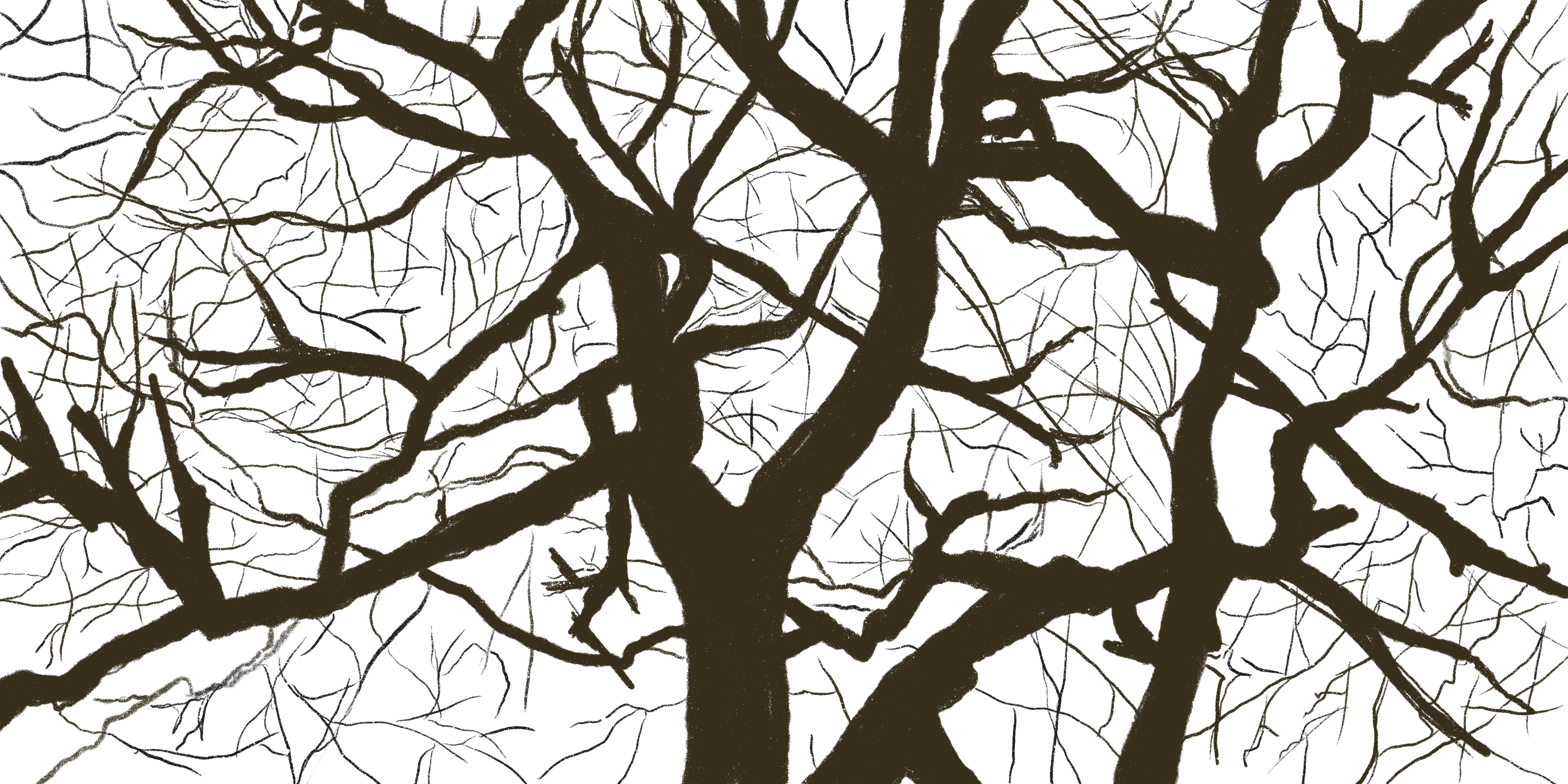 A black and white tree illustration.