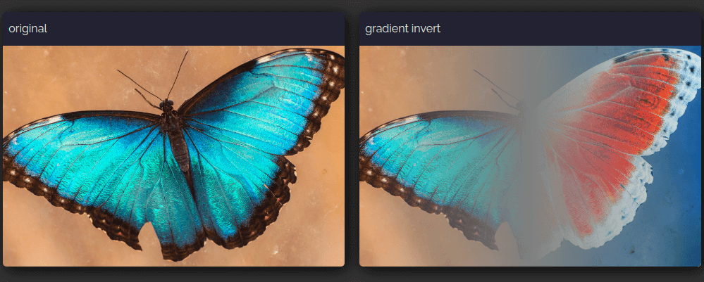 Screenshot of the original butterfly image on the left and the gradually inverted one on the right.